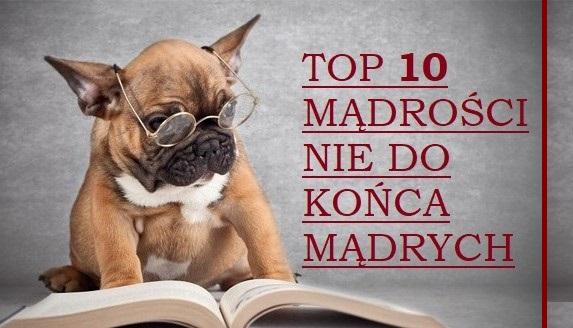 Top 10 mądrości nie do końca mądrych - grafika z psem.