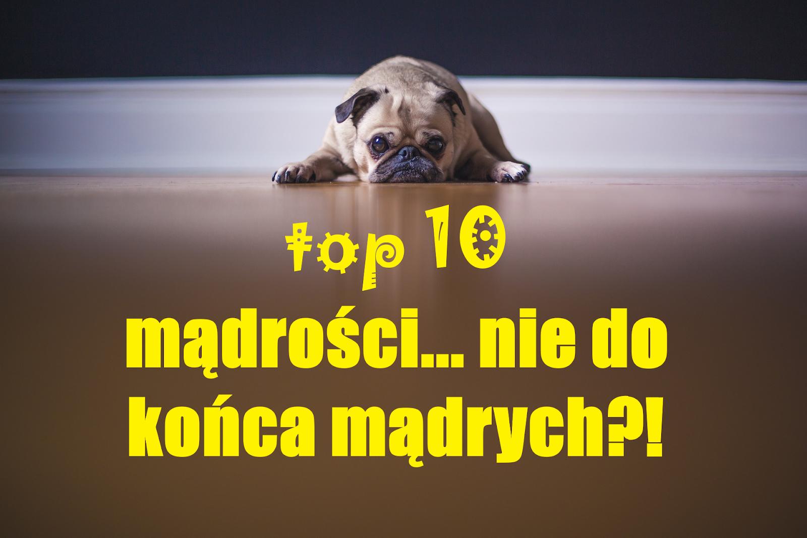 TOP 10 MADROSCI NIE DO KONCA MADRYCH