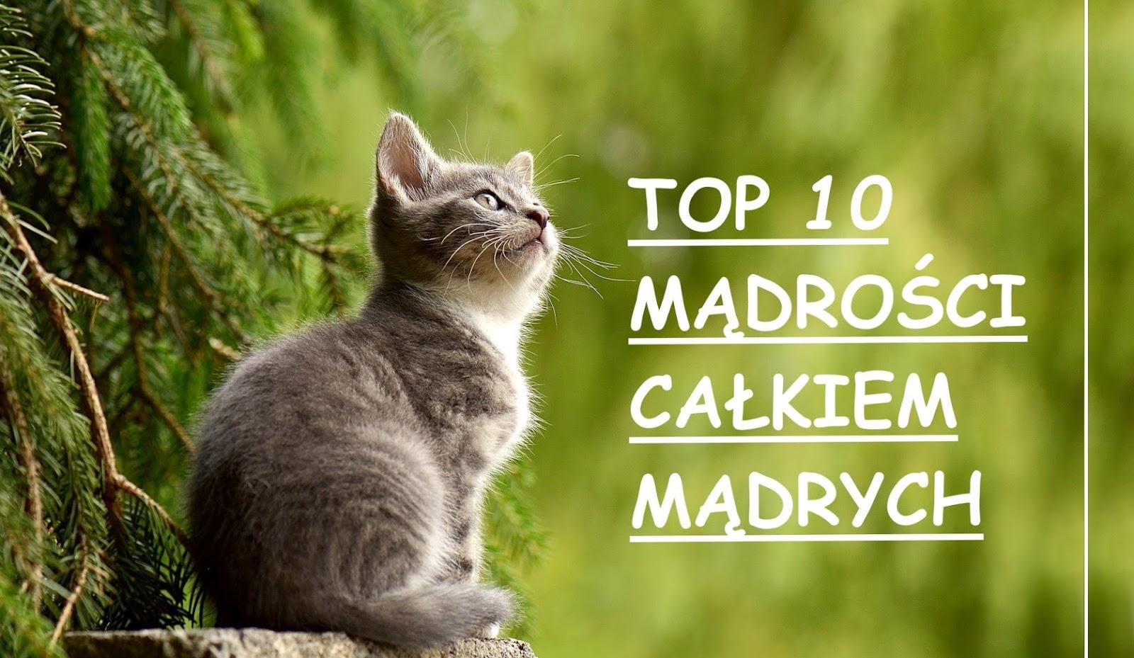 Top 10 mądrości całkiem mądrych - powiedzenia