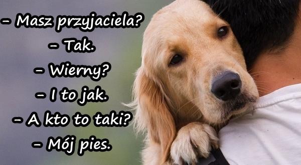 Wierny przyjaciel - powiedzenia polskie